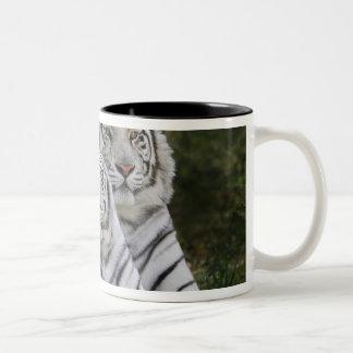 Vit arrangerar gradvis, den Bengal tigern, Tigris Två-Tonad Mugg