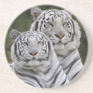 Vit arrangerar gradvis, den Bengal tigern, Tigris Underlägg Sandsten