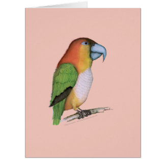 vit buktad papegoja, tony fernandes jumbo kort