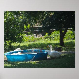 Vit duckar och en bassängaffisch print