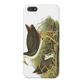Vit-gick mot Waterhen iPhone 5 Cases