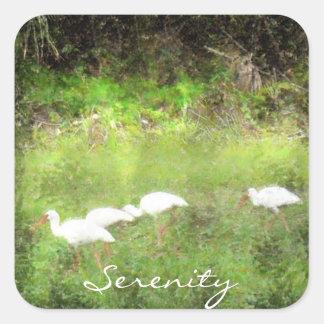 vit ibis fyrkantigt klistermärke