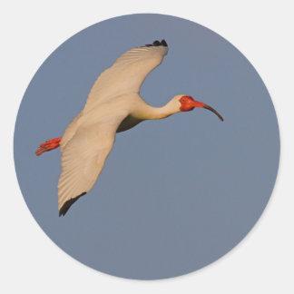 Vit Ibis i flyg Runt Klistermärke