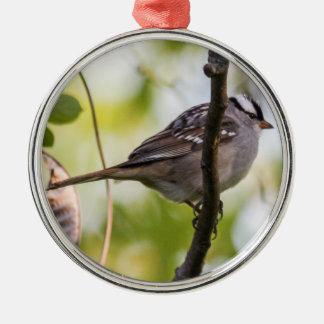 Vit-krönad Sparrow Julgransprydnad Metall
