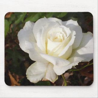 Vit ros som gifta sig Januari brudens sidagåvor Musmatta
