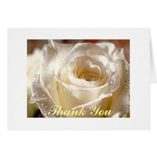 vit ros tack hälsnings kort