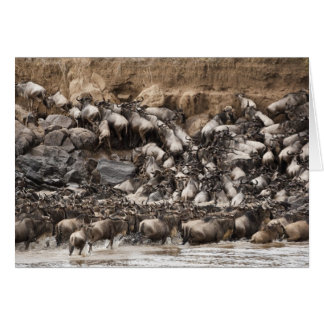 Vit-skäggig Wildebeest eller Gnu, Connochaetes Hälsningskort
