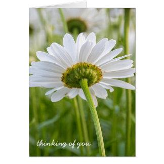 vit som daisy-är tänkande av dig hälsningskort