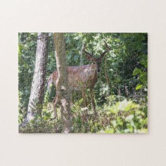 Vit-tailed hjort jigsaw puzzles
