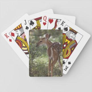 Vit-tailed hjort, Odocoileusvirginianus, 2 Casinokort