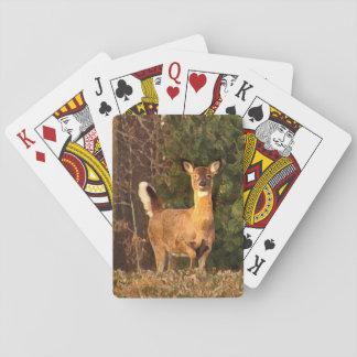 Vit-Tailed hjort på soluppgången som leker kort Spelkort