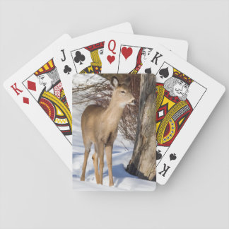 Vit-tailed hjort (slutet upp) casinokort