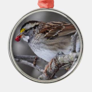 Vit-throated Sparrow Julgransprydnad Metall