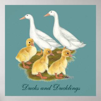 Vitankor och Ducklings Poster