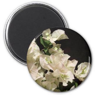 Vitbougainvilleaen blommar magneten magnet rund 5.7 cm