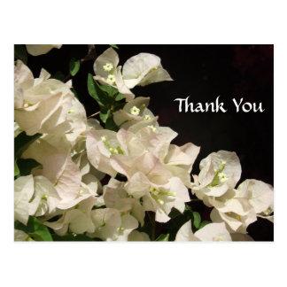 Vitbougainvilleaen blommar tackvykortet vykort