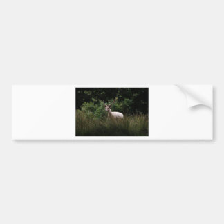 Vitfullvuxen hankronhjort, hjort, djurliv, djurt f bildekal
