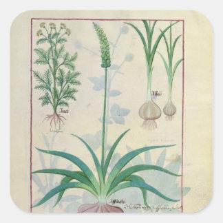 Vitlök och annan växter fyrkantigt klistermärke