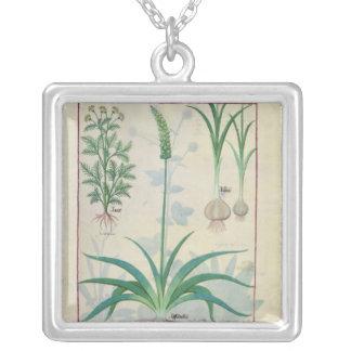 Vitlök och annan växter silverpläterat halsband