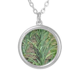 Vitlökväxter ror in i trädgården silverpläterat halsband