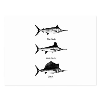 VitMarlin - blåttMarlin - Sailfishlogotyp Vykort