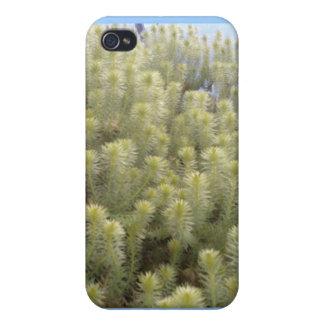 Vitogräs iPhone 4 Hud