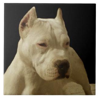VitPitbull Terrier Kakelplatta