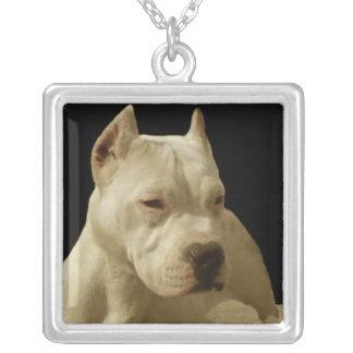 VitPitbull Terrier Silverpläterat Halsband