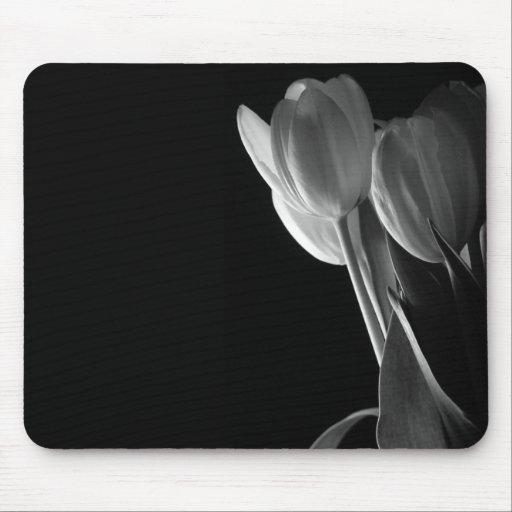 Vittulpanfoto på svart bakgrund mus mattor