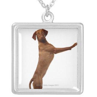 Vizsla hund silverpläterat halsband