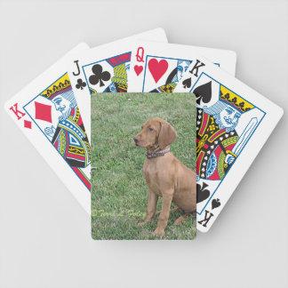 Vizsla valp - cykel som leker kort spelkort