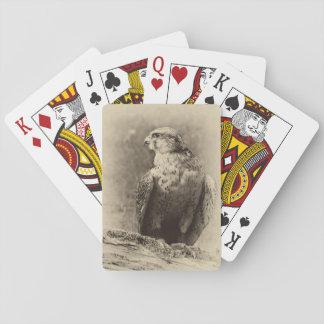 Vråk som leker kort spel kort