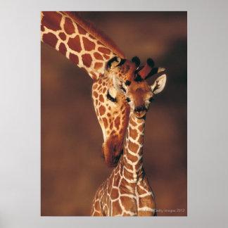 Vuxen giraff med kalven (Giraffacamelopardalis) Poster