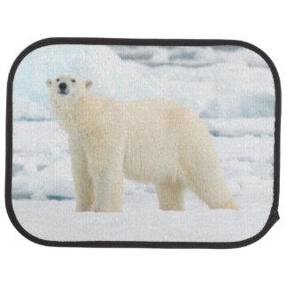 Vuxen polar björn i sökande av mat bilmatta