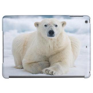 Vuxen polar björn på sommarpackeisen