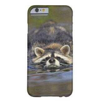 Vuxen Raccoon, ProcyonlotorOrder: Barely There iPhone 6 Fodral