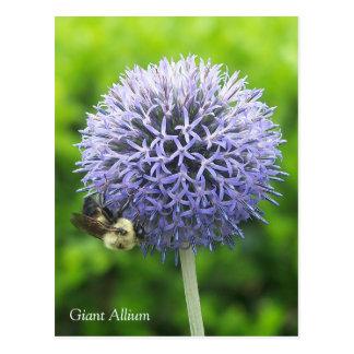 Vykort för Alliumblomma- och honungbi