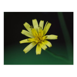 Vykort för blommigt för vildblomma för