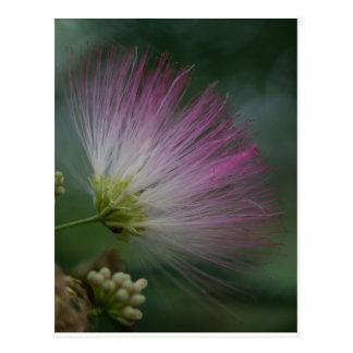 Vykort för blommigt för vildblomma för Mimosaträd