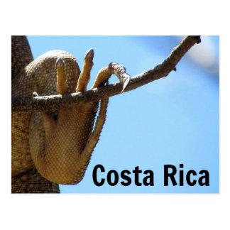 Vykort för Costa Rica leguansouvenir