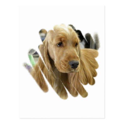 Vykort för hund för cockerspanielSpanielvalp
