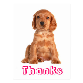 Vykort för hund för valp för tackcockerspanielSpan