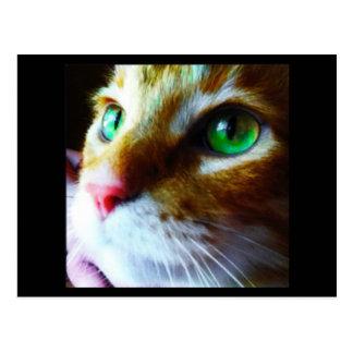"""Vykort för katt """"för diskonågot att säga hög"""" vykort"""
