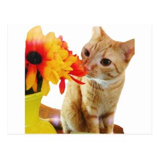 """Vykort för katt """"för smörnågot att säga hög"""" vykort"""