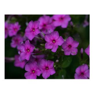Vykort för natur för rosa vildblomma för