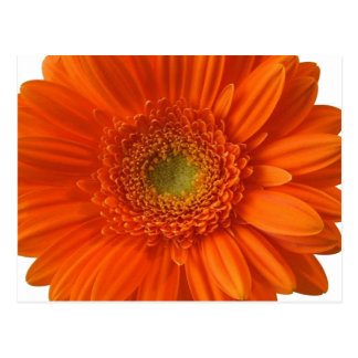 Vykort för orange daisy