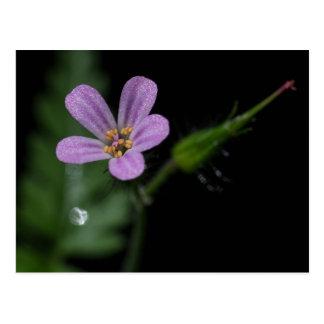 Vykort för örtRobert rosa purpurfärgad vildblomma