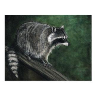 """Vykort """"för Raccoon"""" djurlivkonst"""