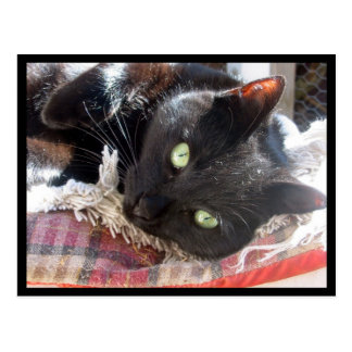 """Vykort """"för svart katt"""""""