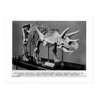 Vykort för Triceratopsprorsuskonst